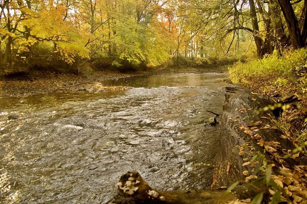 Trout fishing in Arkansas