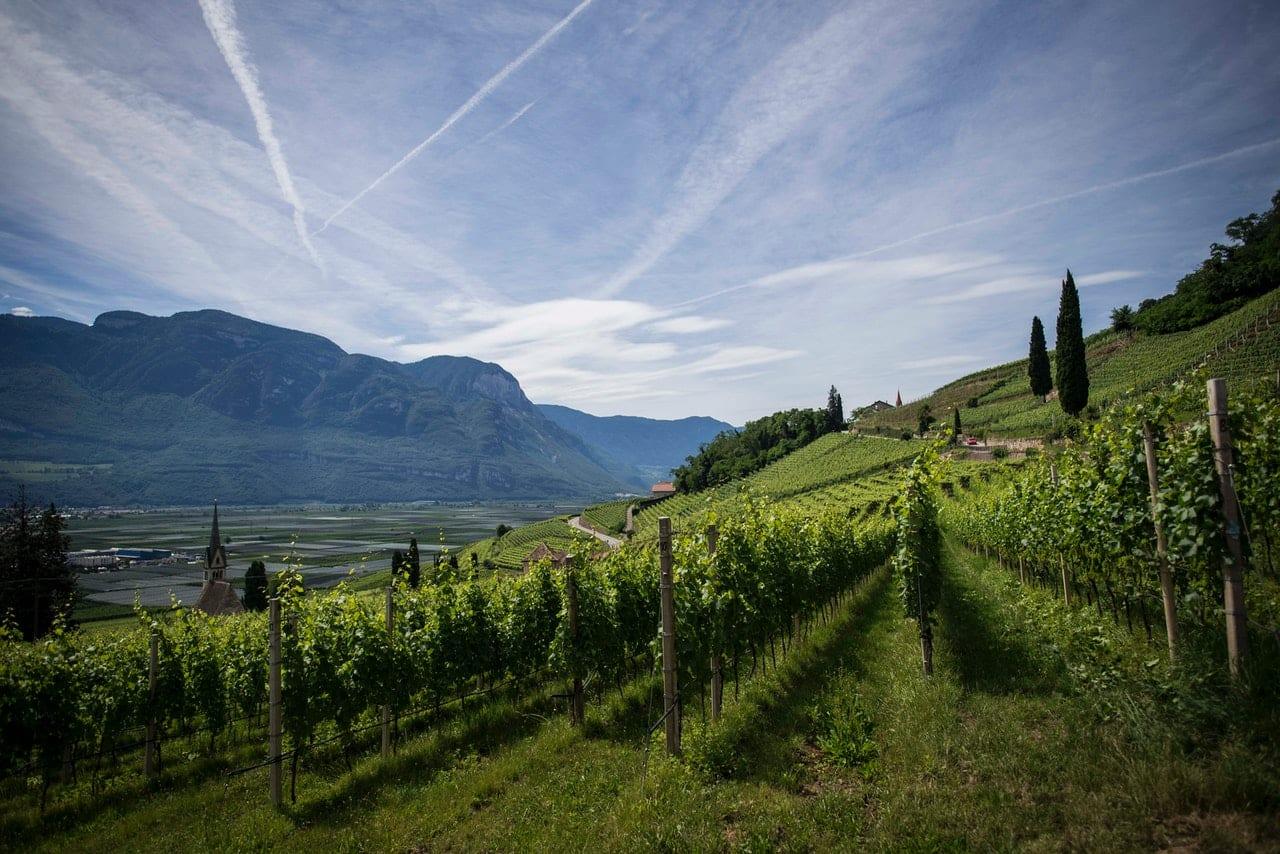 missouri wineries and vineyards
