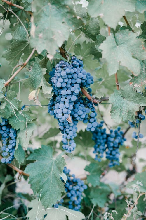 Wineries in Maryland