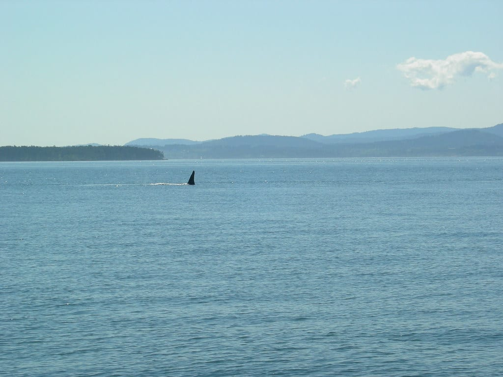 whale watching seattle